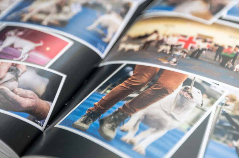 Bull Terrier Yearbook 2016